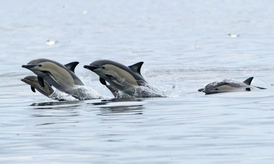 Дельфины в Салониках